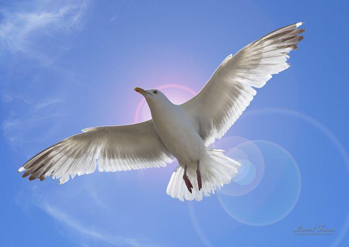 Bird Flying Peace - Lionel Fraser, Pictures of Eastbourne, England