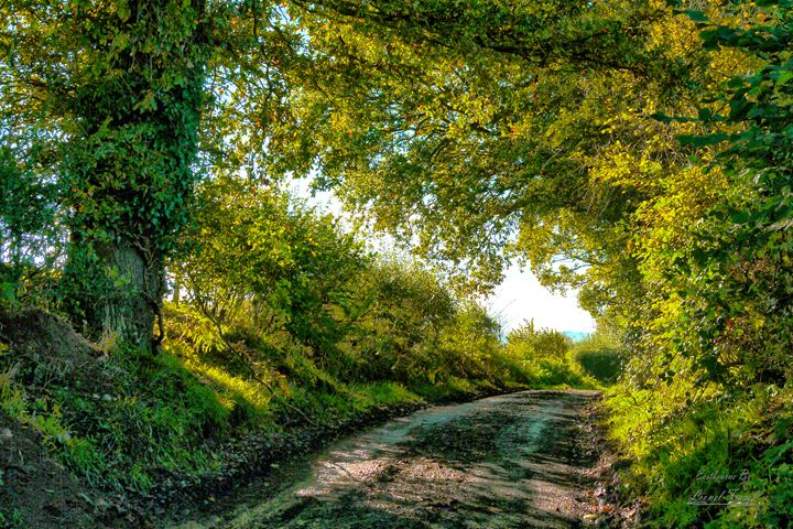 Country Lane in HDR - Lionel Fraser, Pictures of Eastbourne, England