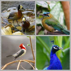 a Myriad of birds