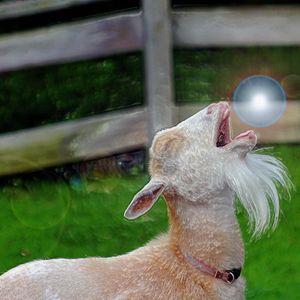 spirit Goat