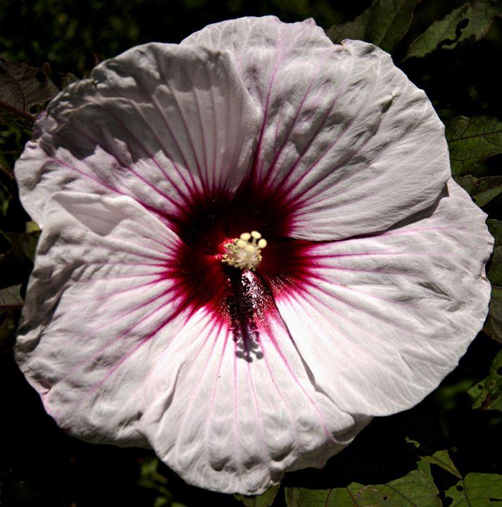 Orchid closeup - AllanE Photography