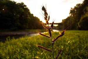 Sunset on Grass