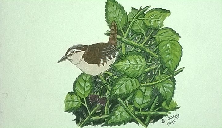 Little jenny wren - paintings 4 u