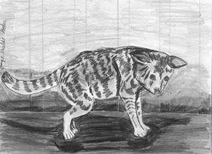 Cat In Pencil - Margie Shields McKee
