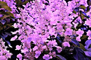 Purple Surprise