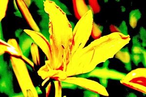 Blooming Lilly