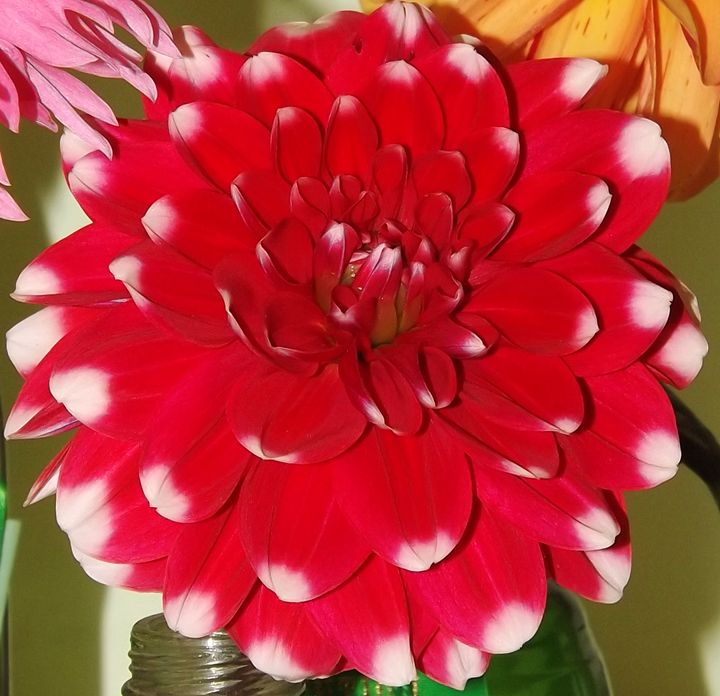 Red Dahlia - Journey On Gallery