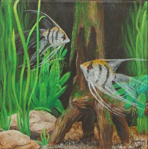 Angelfish Encounter