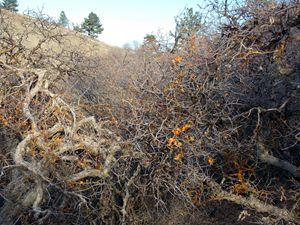 Autumn Chaparral 3