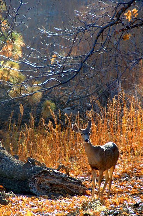 Early Morning  Deer - John Rand