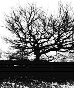 Black an white tree