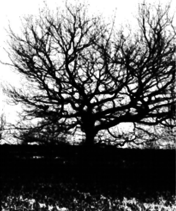 Black an white tree - digitalart Rob Elfferich