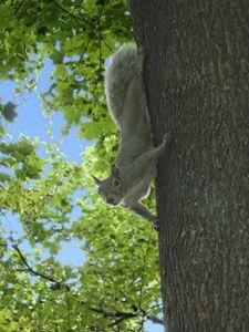R U Nuts