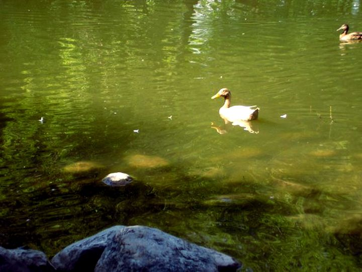 Sunny Pond - Scribblings/Photography