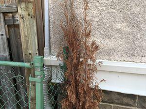 Small tree plant