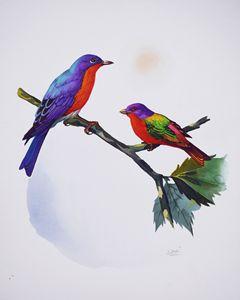 Eastern Bluebird & Painted Bunting
