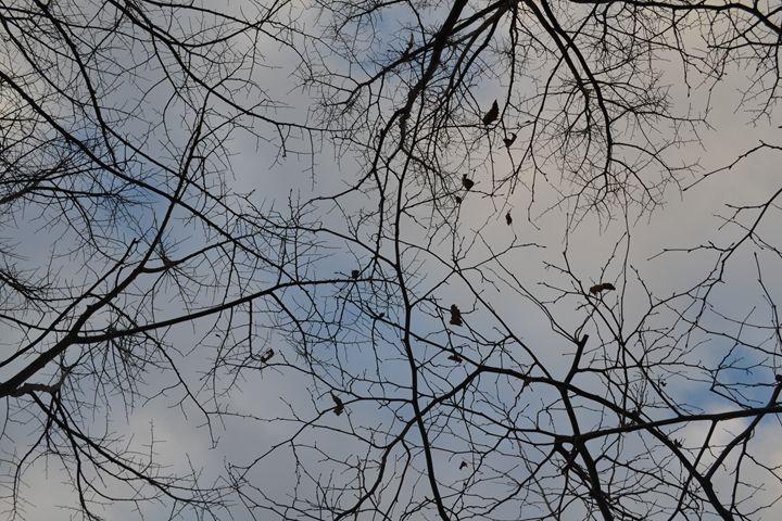 Infinity of fractals - Aleksandra Sazonova