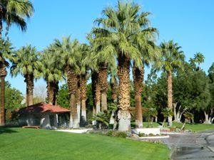 Guard Gate Palms
