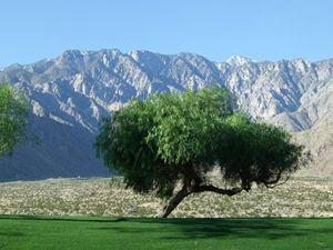 Desert floor-San Jacinto Mountain
