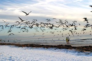 blasted by seagulls