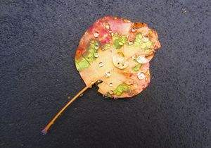 Fall Stop