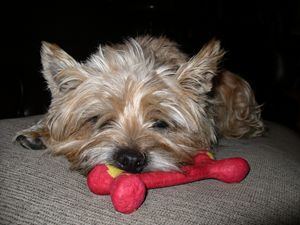 You said you'd get me a small toy? - Islay's Inspirations