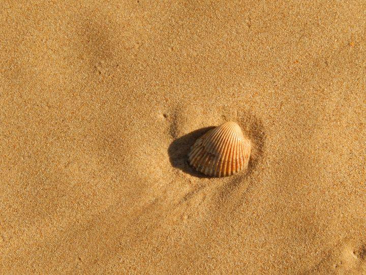 sea shell and sand - Islay's Inspirations