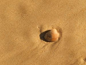 sea shell and sand