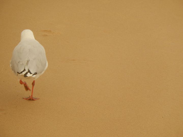 sand and seagull - Islay's Inspirations