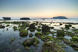 Mosses zone - Vietnam beauty landscape