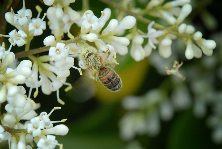 Covered in Pollen - Colleen G. Drew Photography