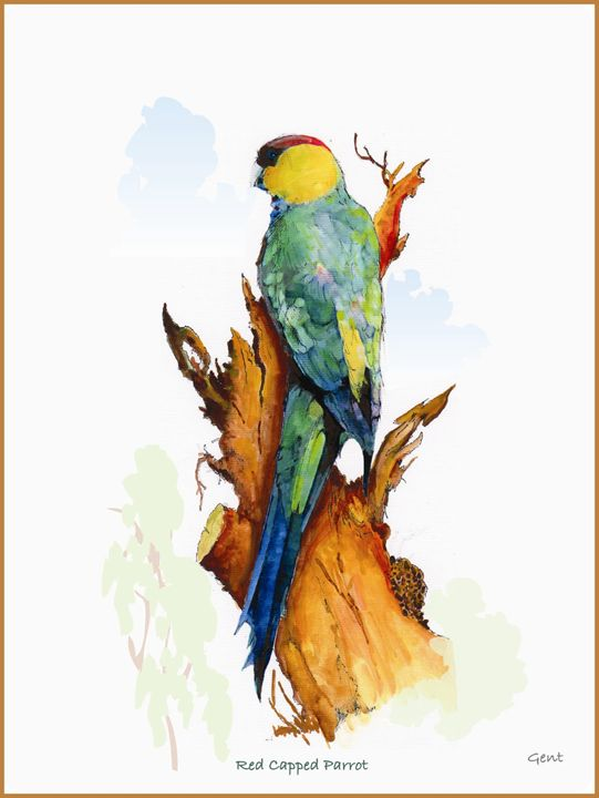 Red Capped Parrot - Arty Allsorts