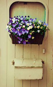 Flowers and mailbox - Scott McKone