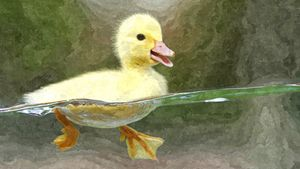 The duck who could