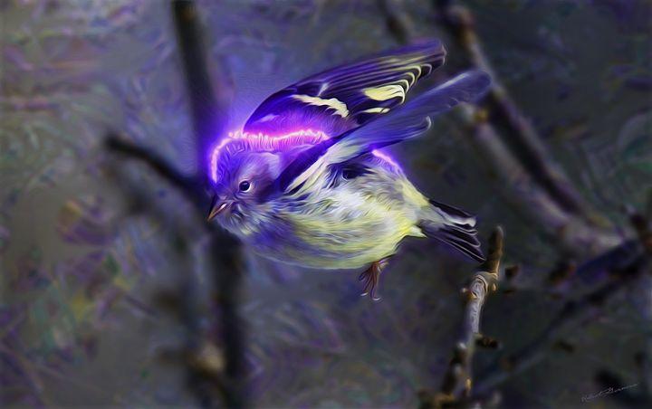 Neon Finch - Harmonic Imagery