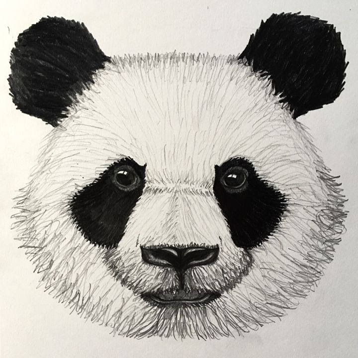 Panda - ZET Art