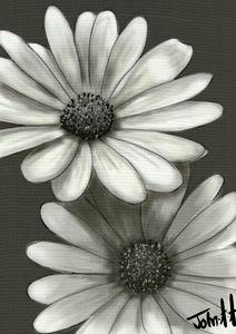 Grey Camomile flower - Jartndesign