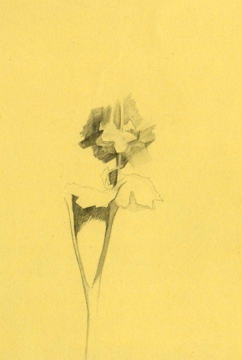 Tiny flower fantasy - D. BRIGHT GALLERY