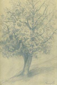 Hazelnut tree in a Fogy Day