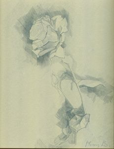 Rose bloom in a sketch
