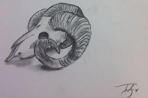 Sheep Skull