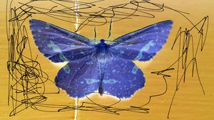The Butterfly scribble