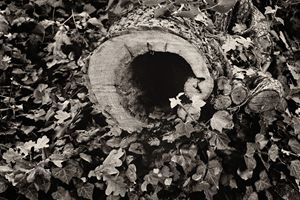 { A Yard Of Faces } - Tree Hole