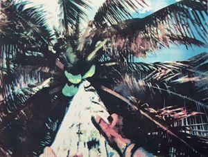 Up de Coconut Tree
