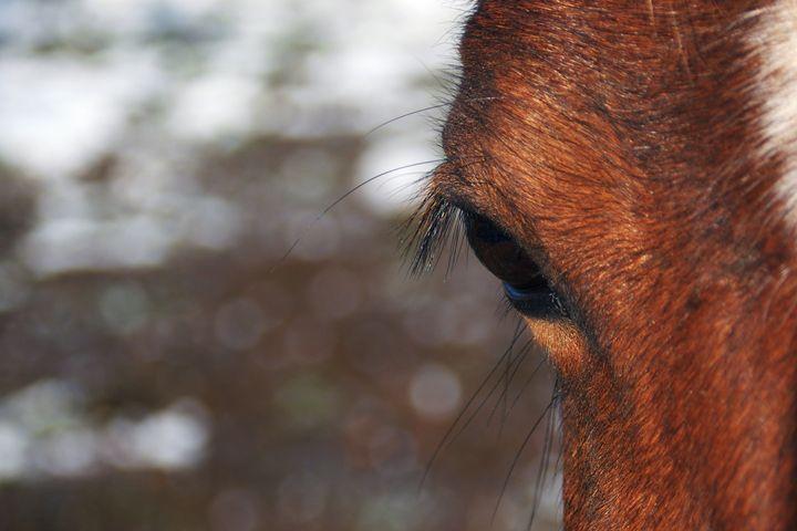 Horse's Eye - Brittany Megis Photography
