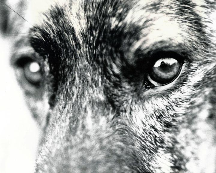Dog Analog - Brittany Megis Photography