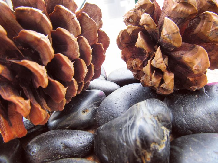 Pinecone and Rock Interior Design - The Creations of Amber Kieffer