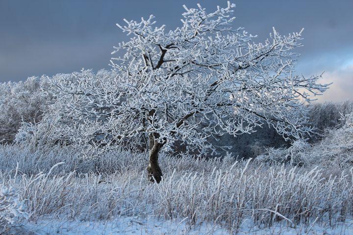 The Beauty Of Winter - Aaryn Buckholtz