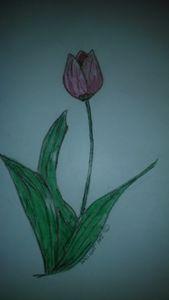 Pink Tulip - Wright art