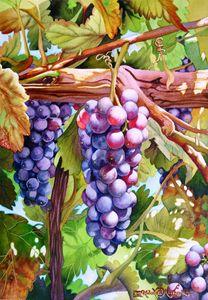 Ripening Grapes - Robert C. Murray II